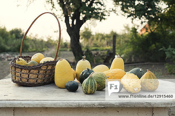 Autumn pumpkins on a wooden table in the garden