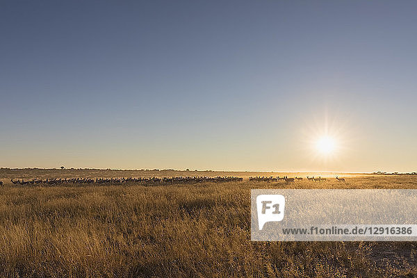 Botswana  Kalahari  Central Kalahari Game Reserve