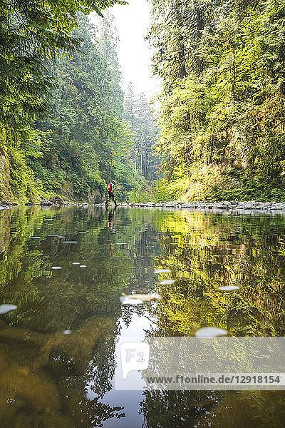 Distant view of single male biologist conducting stream survey  Maple Ridge  British Columbia  Canada