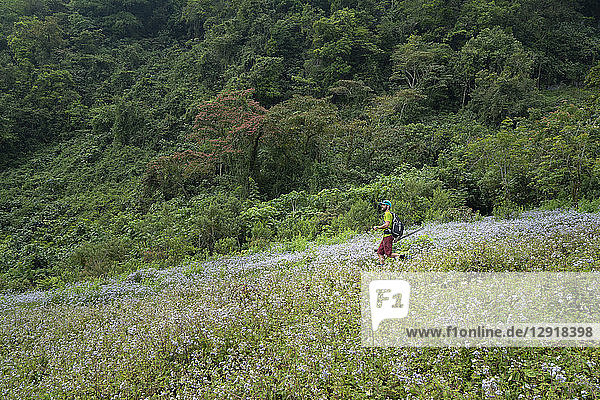 One man hikes on a trail at the area of Los Limones in Xicotepec de Juarez  Puebla  Mexico.
