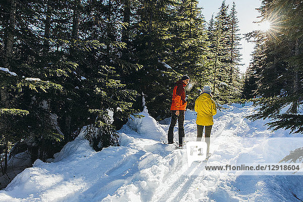 Sun shining over couple¬Ýsnowshoeing in¬Ýsnow-covered¬Ýforest  Whistler  British Columbia  Canada