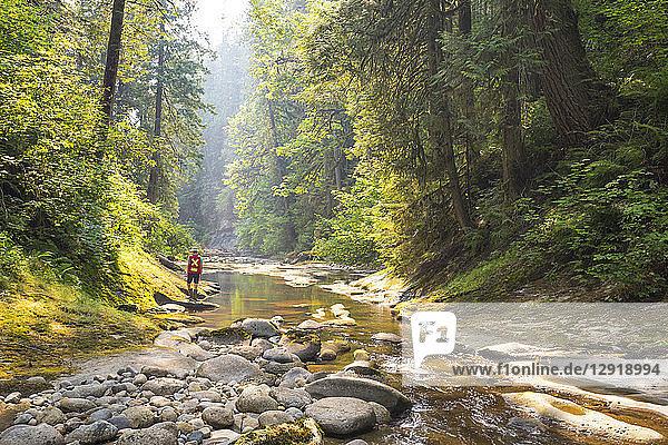 Distant view of biologist conducting stream survey  Maple Ridge  British Columbia  Canada
