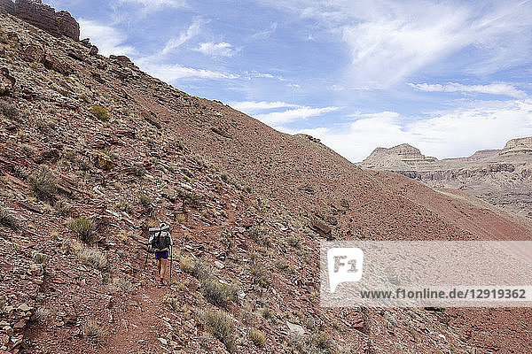 Rear view of female backpacker hiking on mountainside in Grand Canyon  Arizona  USA