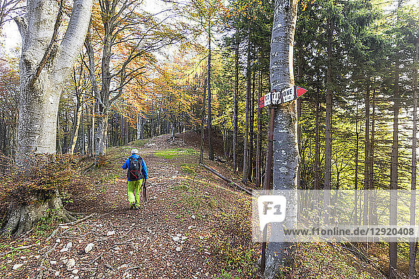 Hiker in the woods during autumn  Piani Resinelli  Valsassina  Lecco province  Lombardy  Italy