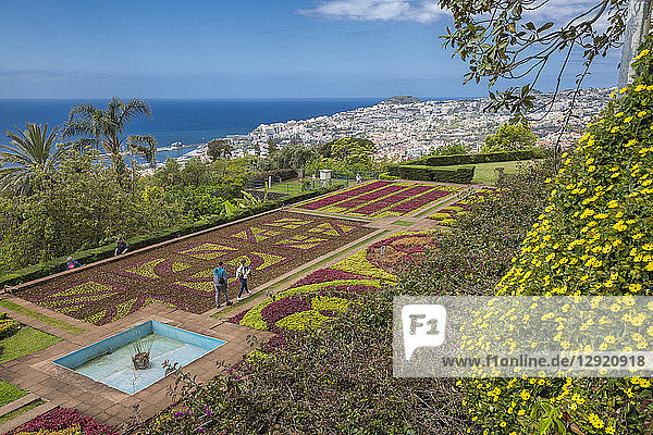 View of exotic flowers in the Botanical Gardens  Funchal  Madeira  Portugal  Atlantic