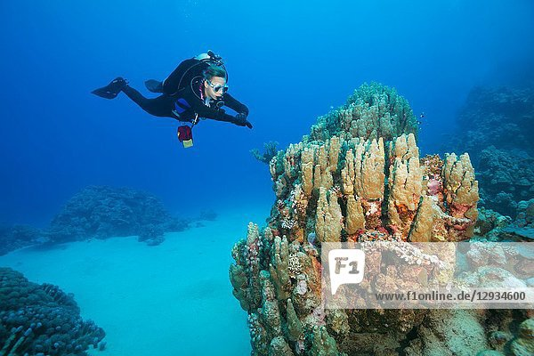 Female scuba diver look at on beautiful coral reef.