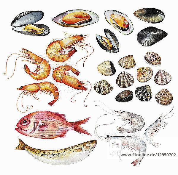 Aquarellgemälde einer Auswahl an Meeresfrüchten