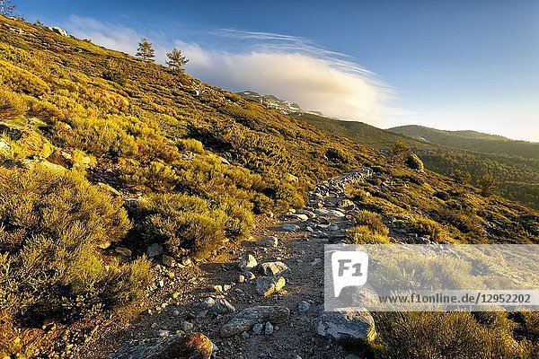 The lagoons path in Penialara National Park on a sunny day. Madrid. Spain.
