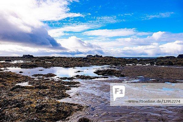 Seal Beach of Ytri Tunga  Snaefellsnes peninsula  Iceland.