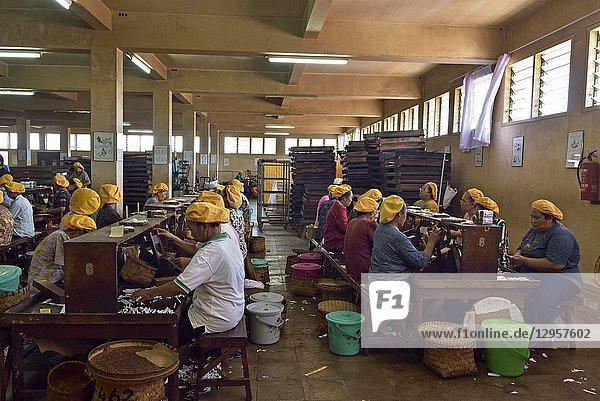 Women workers at Tapel Koeda Kretek (Clove Cigarette) Factory at Juwana  Java island  Indonesia  Southeast Asia.