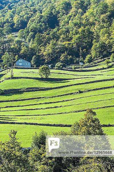 France  Pyrenees National Park  Occitanie region  Val d'Azun  Ouzoum valley near Arbeost  barn