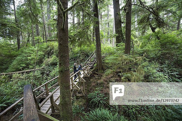 North America  Canada  British Columbia  Vancouver Island  Pacific Rim National Park Reserve . two female tourists hiking on the rainforest trail.