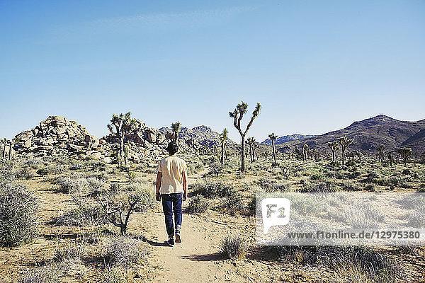 Mid adult man walking in Joshua Tree National Park  USA