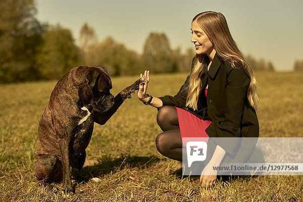 Woman and dog giving high five  on meadow in Unterhaching  Munich  Bavaria  Germany.
