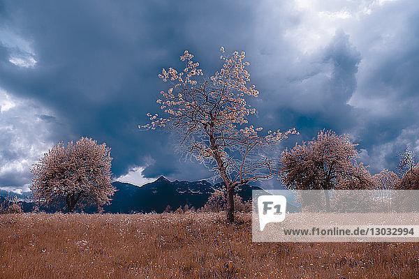 Herbstlandschaft mit Wiesen und Gewitterwolken über den Bergen  Francenigo  Venetien  Italien