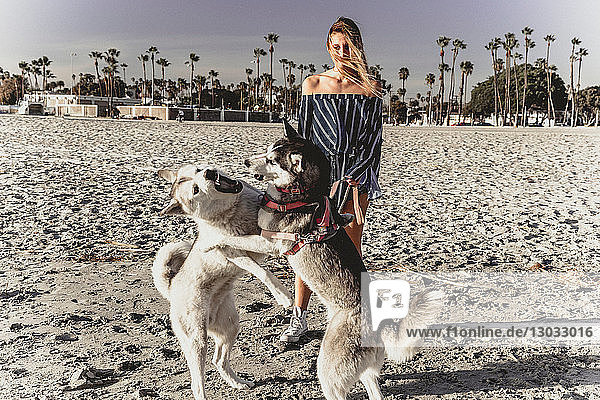 Young woman watching pet dogs playfighting on beach