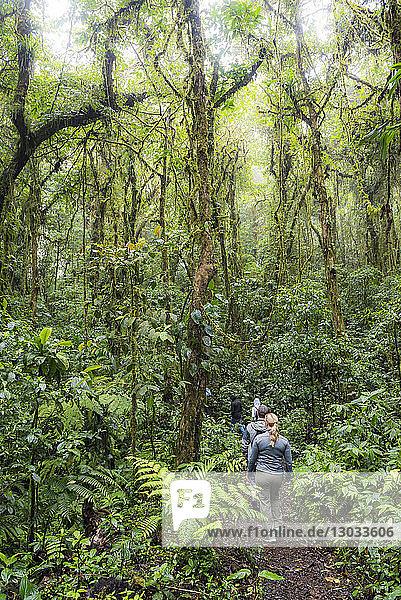 Tourist in Monteverde Cloud Forest Reserve  Puntarenas  Costa Rica