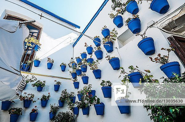 Traditional blue pots on a whitewashed wall in Cordoba  Andalucia  Spain