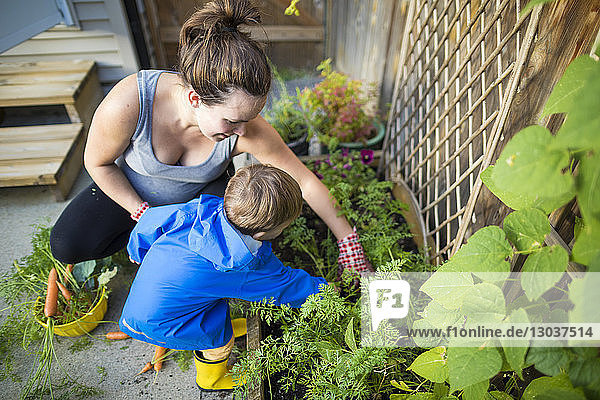 Mother and son harvesting vegetables from a backyard vegetable garden