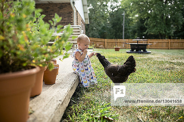 Kleines Mädchen isst Brot,  während es Hühner im Hof füttert