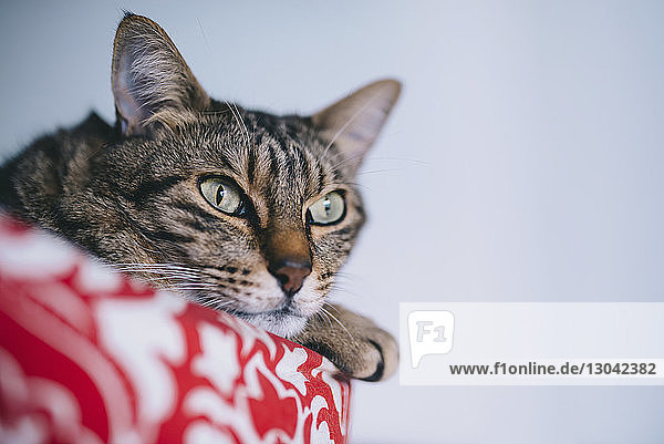 Close-up of tabby cat relaxing at home