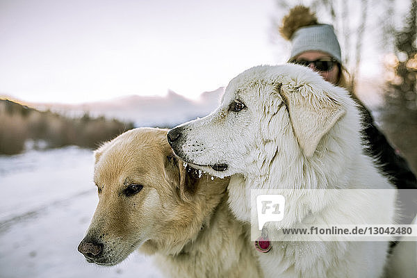 Close-up of dogs with woman on snowy field against sky