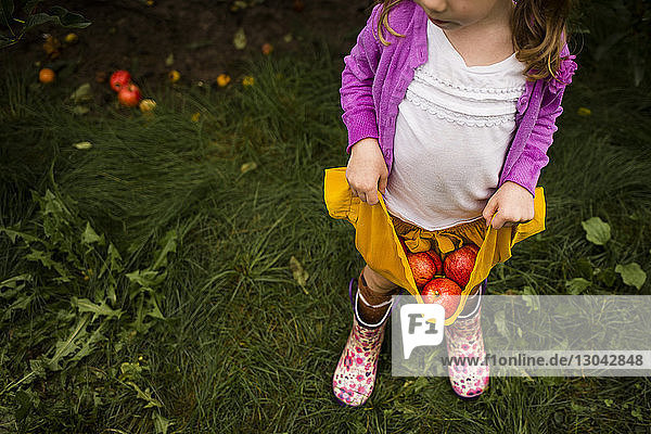 High angle view of girl carrying apples in skirt at orchard