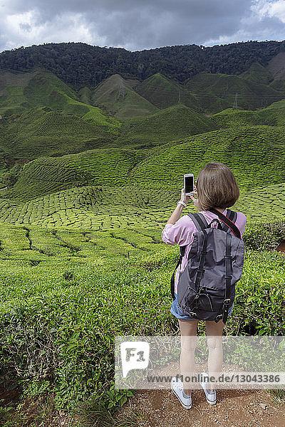 Rückansicht einer Wanderin  die Teepflanzen mit einem Smartphone fotografiert