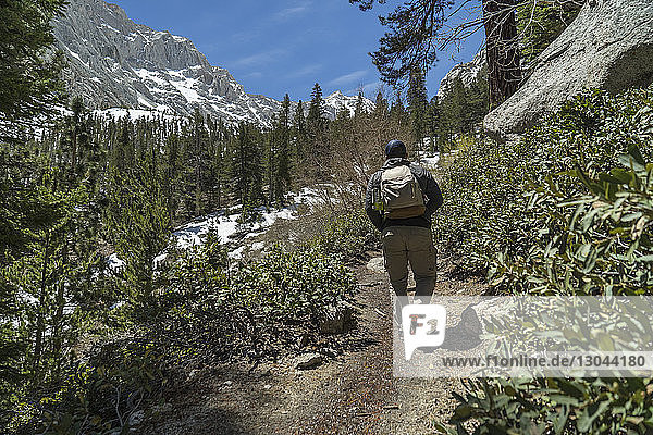 Rear view of hiker with backpack walking on dirt road by plants