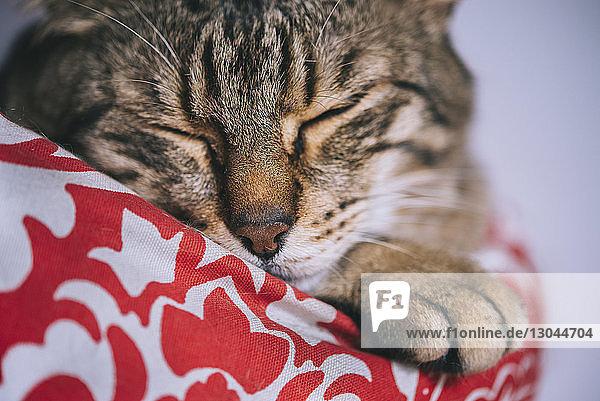 Nahaufnahme einer zu Hause schlafenden Tabby-Katze