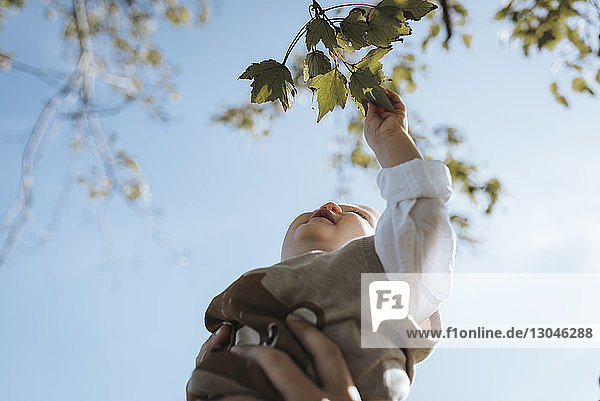 Cropped hand of father lifting baby boy against sky