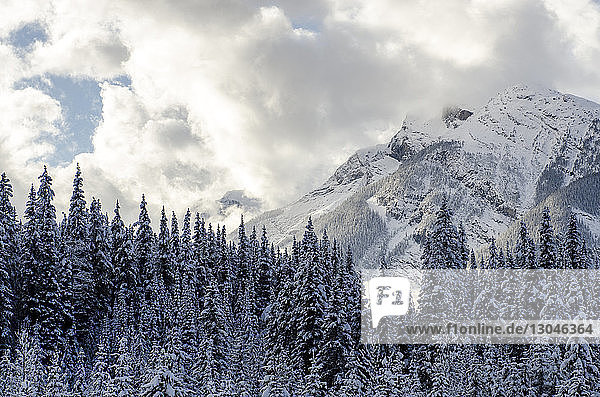 Snow covered pine trees and mountains against cloudy sky