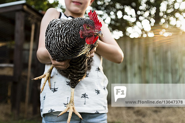 Midsection of boy holding hen at farm