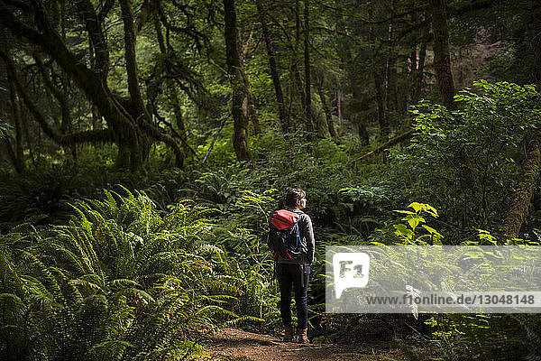 Rear view of female hiker with backpack standing amidst forest at Redwood National and State Parks