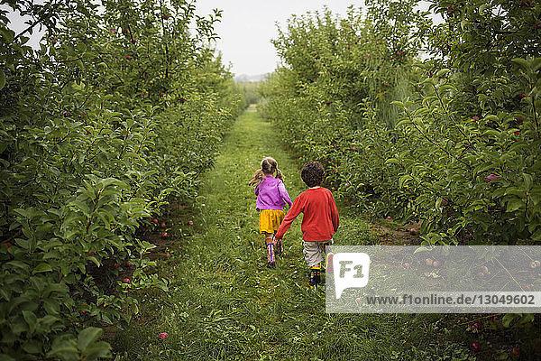 Rückansicht der Geschwister  die auf einem Grasfeld im Obstgarten laufen