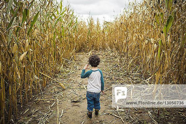 Rückansicht eines Jungen  der auf einem Feld inmitten von Pflanzen steht