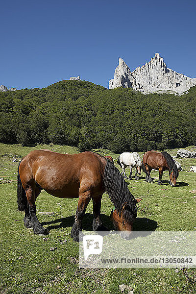 Horses grazing on grassy field at Lescun Valley during sunny day