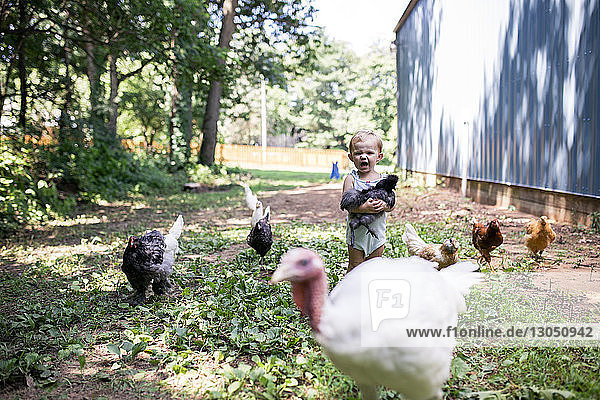 Cute baby girl screaming while holding chicken while standing on grassy field at farm
