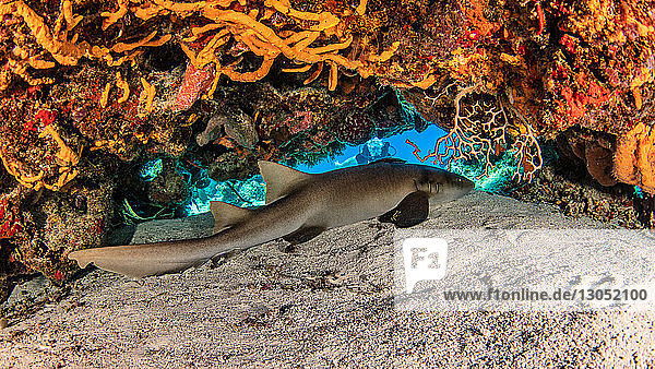 Nurse shark  Cozumel  Quintana Roo  Mexico