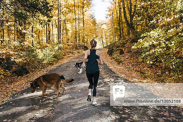 Frau joggt mit Hunden im Wald