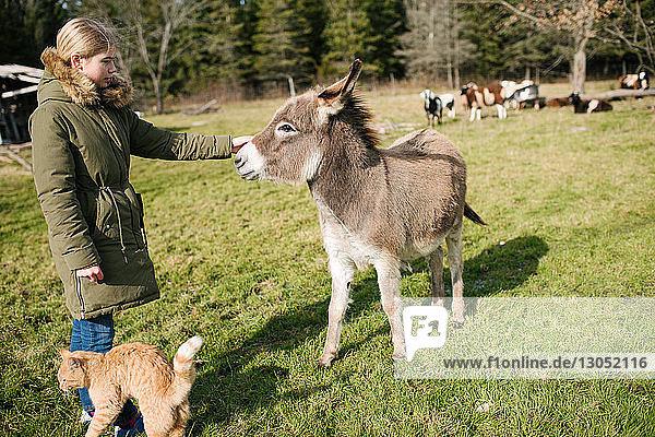 Mädchen streichelt Esel auf dem Bauernhof  Kühe im Hintergrund
