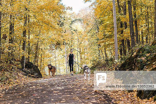 Frau joggt mit Hunden an der Leine im Wald