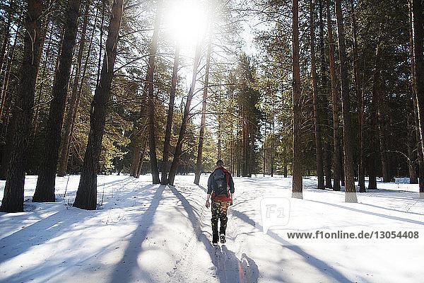 Rückansicht eines Mannes  der im Winter an einem sonnigen Tag im Wald wandert