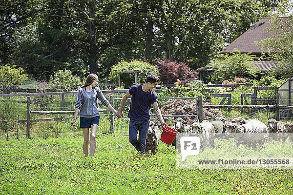 Ehepaar betrachtet Schafe beim Spaziergang auf dem Bauernhof