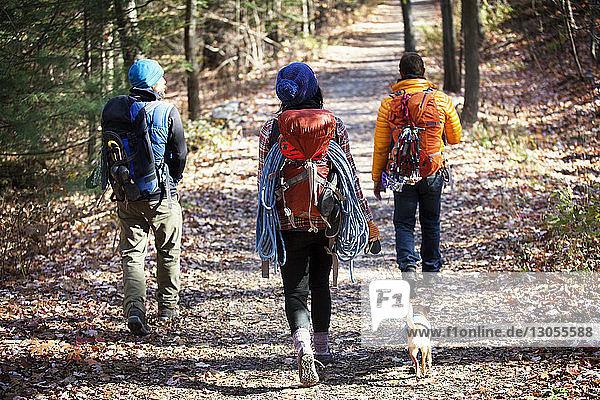 Rückansicht von Freunden mit Rucksäcken  die im Wald auf der Straße gehen
