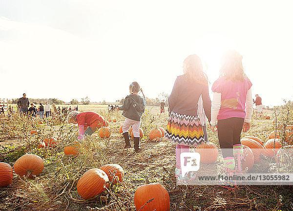 Rückansicht von auf dem Feld spielenden Mädchen bei klarem Himmel an einem sonnigen Tag