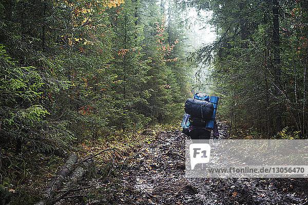 Wanderer mit Rucksäcken auf unbefestigtem Weg inmitten von Bäumen im Wald