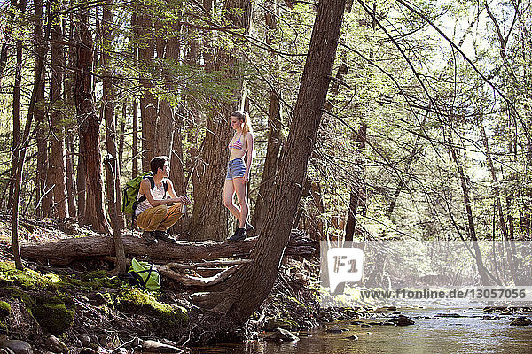 Woman looking at man crouching on fallen tree trunk