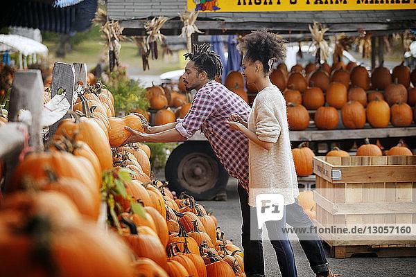 Mann nimmt Kürbis aus den Regalen am Marktstand