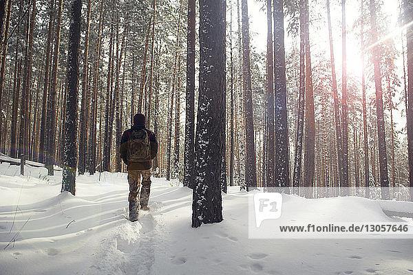 Rückansicht eines Wanderers  der im verschneiten Wald wandert